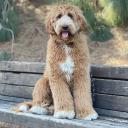 Xiaochao Yang