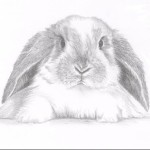 Profile picture of KYbunnies