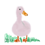 Profile picture of confuzzledduck